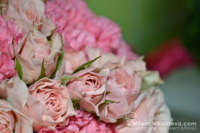 Рози в розово (2)