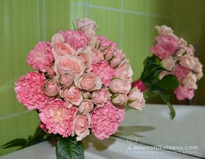 Рози в розово